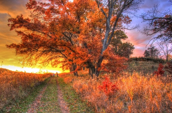 sunset over trees and path in southern wisconsin