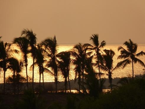 sunset palm trees sea