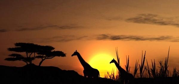 sunset solar giraffe
