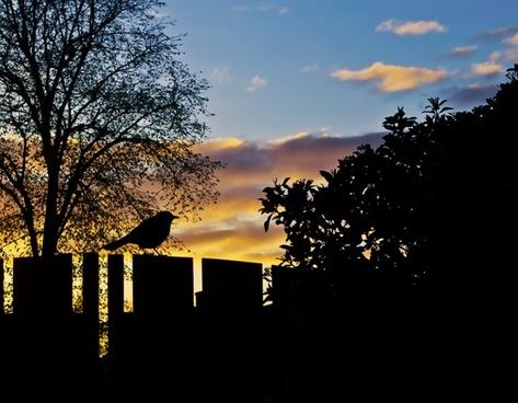 sunset spring sky