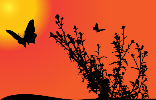 sunset with butterfly silhouette vector