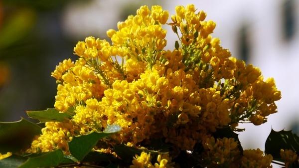 sunshine spring flower