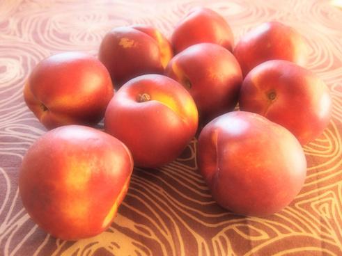 sweet nectarines