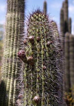 tall cactus plant