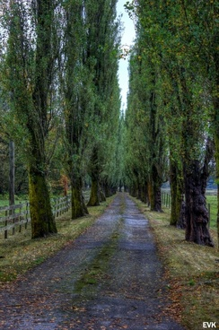 tall trees road