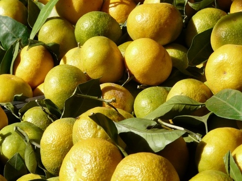 tangerines clementine tropical fruit