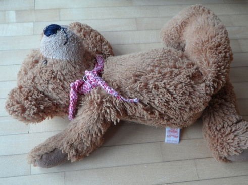 teddy careless thrown away