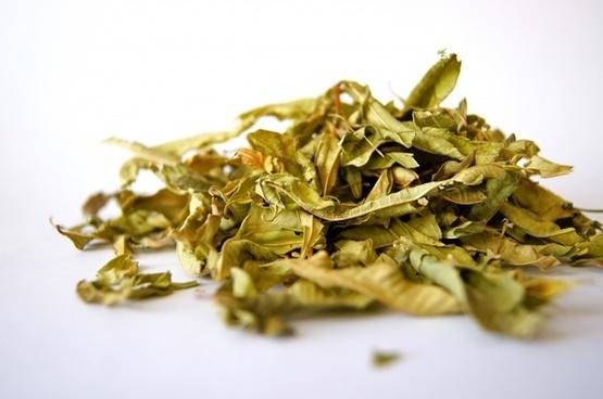tee herb spice
