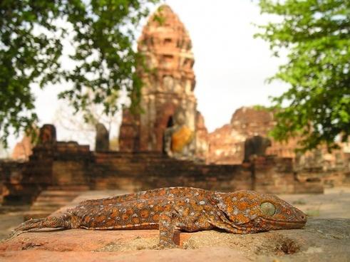 temple buddhism iguana