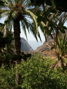 tenerife nature canary islands