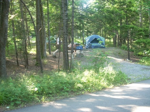 tenting at blackwoods campground