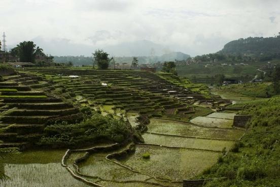 terrains rice rice field