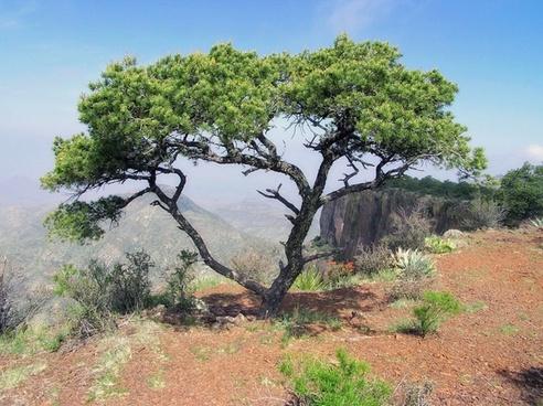texas landscape scenic