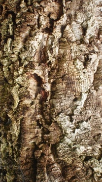 texture cork tree bark