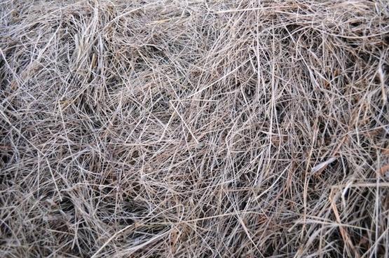 texture hay grass