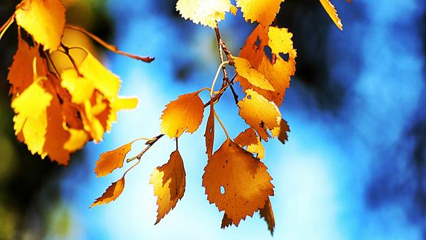 tha last leafs explore 2013 10 16