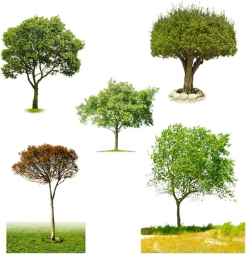 the five kinds of trees psd