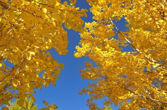the leaves autumn huai yang