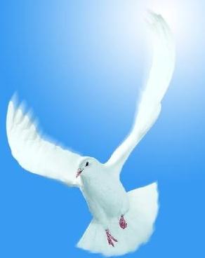 the main theme pigeons psd