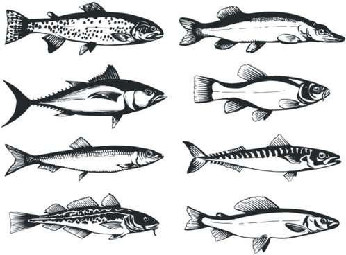 the monochrome fish vector
