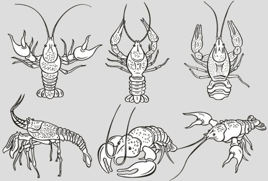 the monochrome lobster vector