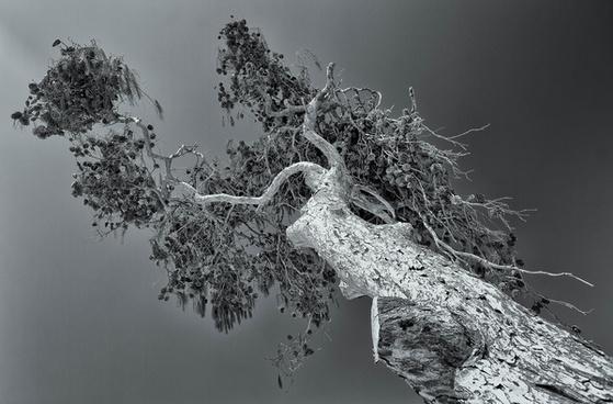 the mozia tree