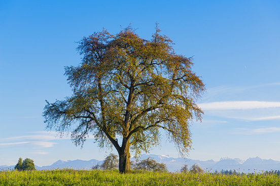 the nice tree