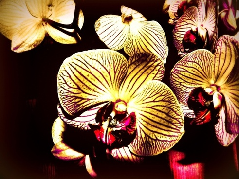 the phalaenopsis orchid creative vibrant color