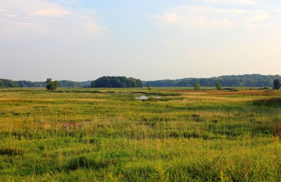 the prairie landscape at chain o lakes state park illinois