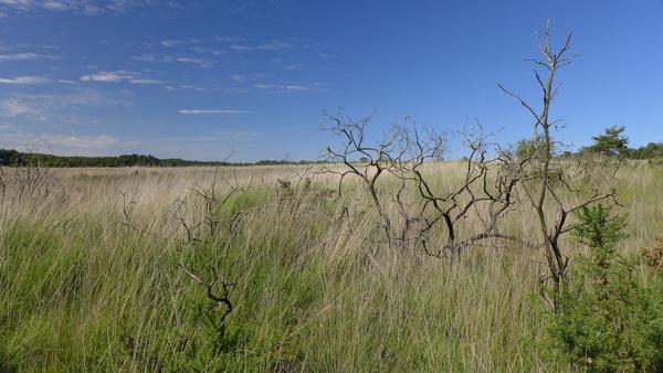 the savannah