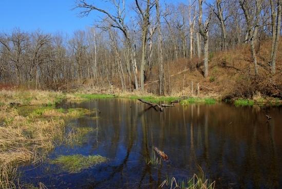 the swamp at kettle moraine south wisconsin