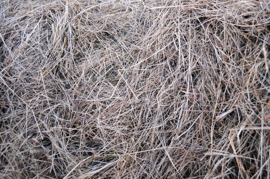 the texture of the hay