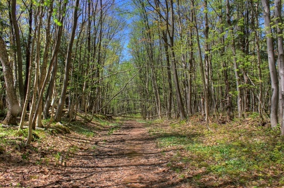 the walking path at porcupine mountains state park michigan