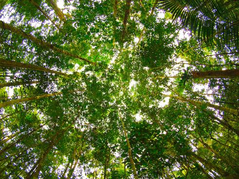 the wonderful amazonian canopy that goes on and goes on and goes on and goes on