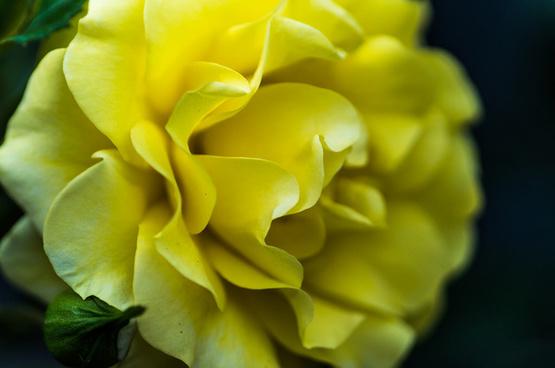 think yellow