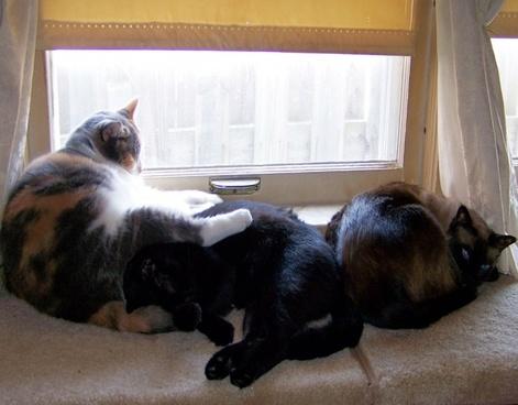 three cats a napping
