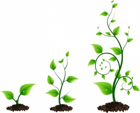 three green plant growth cycle