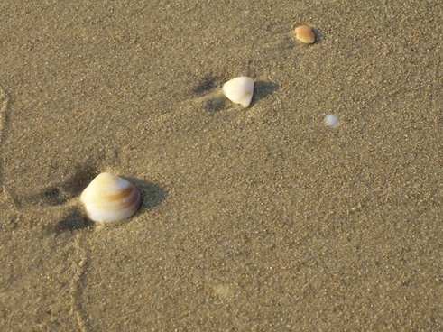 three shells on beach