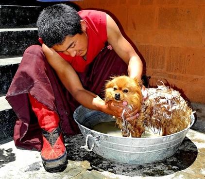 tibet man dog