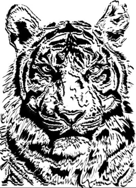tiger image 02 vector