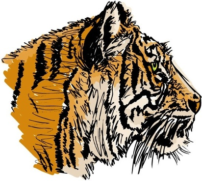 tiger image 29 vector