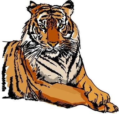 tiger image 34 vector