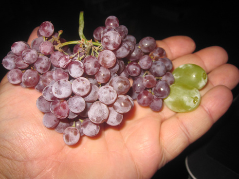 tiny champagne grapes
