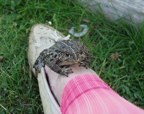 toad leg animal