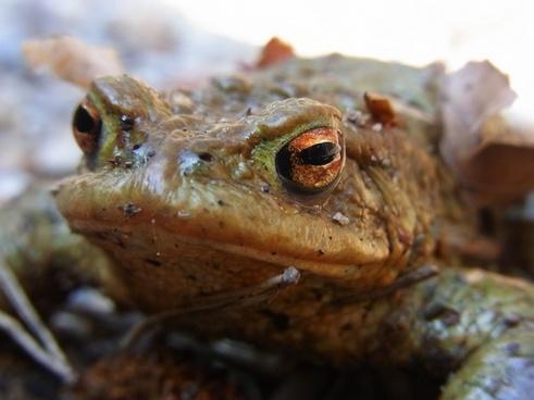 toad pond amphibious