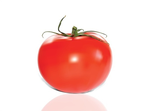 red tomato realistic vector illustration on white background