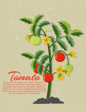 tomato advertising tree icon retro decoration