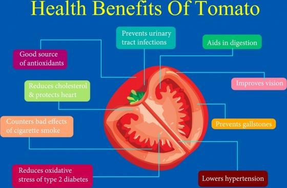 tomato benefit infographic slice icon text decoration