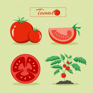 tomato design elements various shiny red types