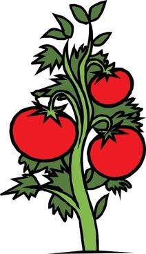 Tomato Plant clip art